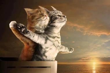 παίζοντας με τη γάτα και το ποντίκι δωρεάν πρακτορείο γνωριμιών com